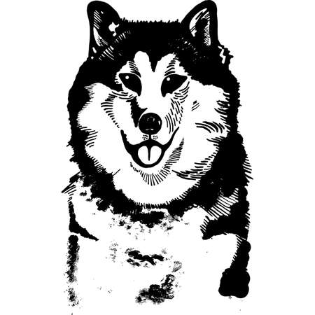 Husky hand drawn ink black and white vector illustration