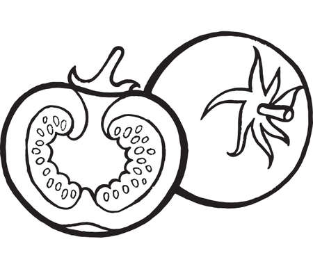 Tomato Coloring Page Hand Drawn Illustration For Adult And Children Vector