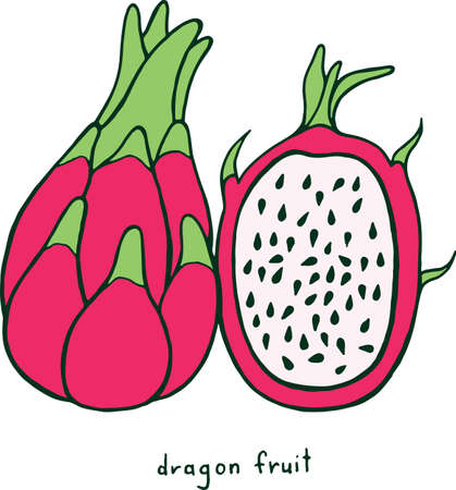Dragon Fruit Coloring Page Graphic Vector Colorful Doodle Art For Books Adults
