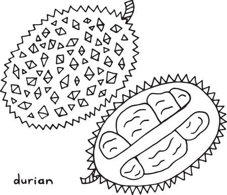 Durian Coloring Page Graphic Vector Black And White Art For Books Adults