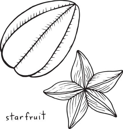 Dragon Fruit Coloring Page Graphic Vector Black And White Art