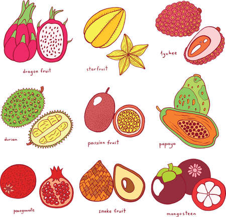 Colorful hand drawn set with tropical exotic fruits. Vector graphic art isolated collection for design, textile, fabric, cards and illustrations.