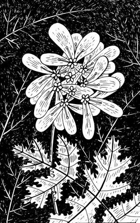 Coriander - flower illustration. Black and white ink floral drawing. Coloring book for adults. Line art. Vector artwork.