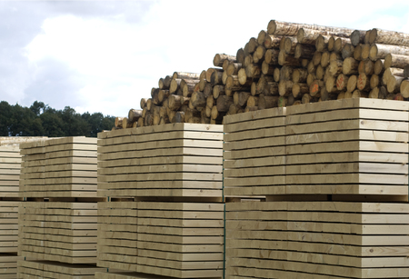 Wood processing - saw mill. A large pile of logs ready for processing at the saw mill.