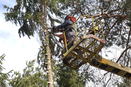 Two woodcutters cut down a tree on the platform Banque d'images - 115485689