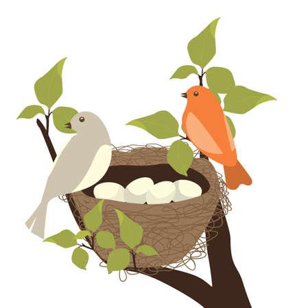 birds in tree: Birds Nest