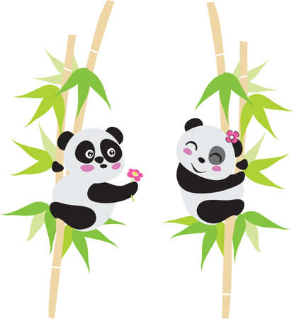 Amor de oso panda