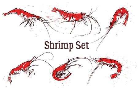 Hand drawn boil prawn or shrimp. Text SHRIMP SET. Sketch vector set good for pub menu decoration