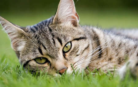 jovial: Home cat in the garden