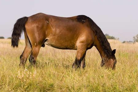 Horse Stock Photo - 1350769