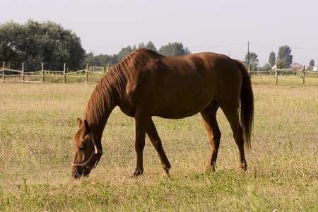 Horse Stock Photo - 1350784