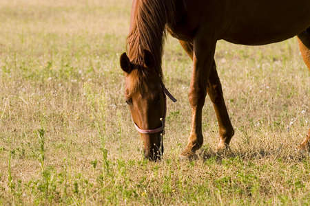 Horse Stock Photo - 1350785