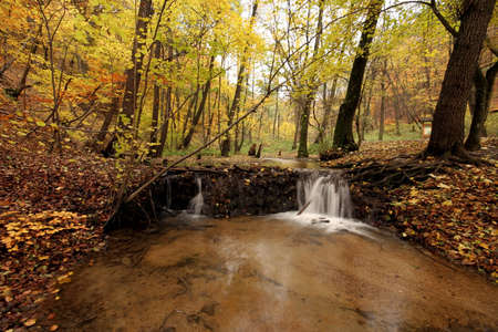 Forest in autumn Stock Photo - 2354147