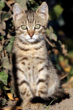 Home cat in the garden photo