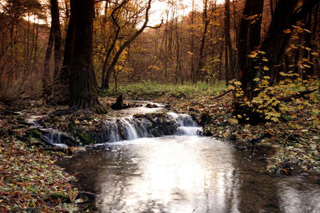 Creek in the forest in Autumn Stock Photo - 2104136