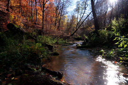 Creek in the forest in Autumn Stock Photo - 2104384