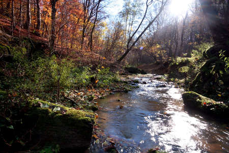 Creek in the forest in Autumn Stock Photo - 2104385