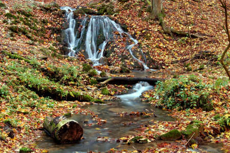 Creek in the forest in Autumn Stock Photo - 2104423