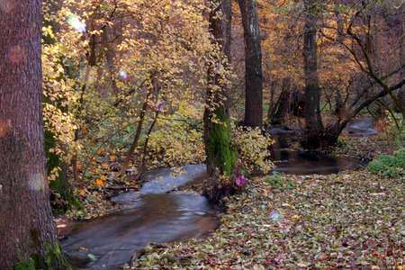 Creek in the forest in Autumn photo