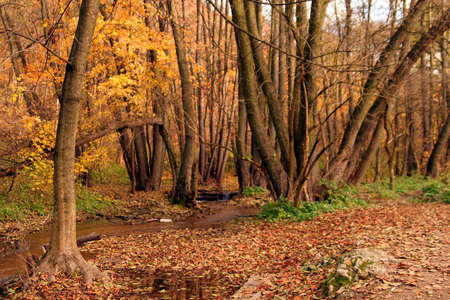 Creek in the forest in Autumn Stock Photo - 2104144