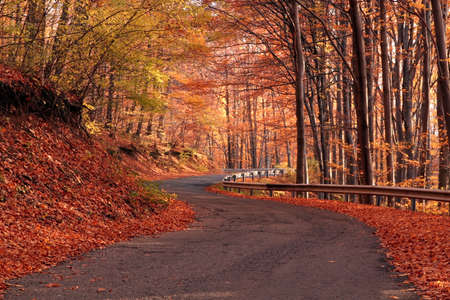 colorful maple trees: Country road in autumn
