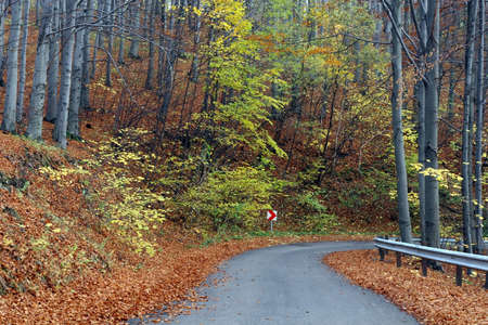 Country road in autumn photo