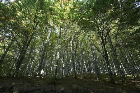 cleanness: Autunno colori nella foresta  Archivio Fotografico