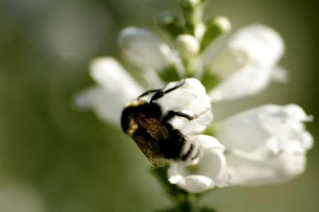 Flower in the garden Stock Photo - 2354153