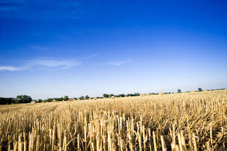 Field of gold and blue sky photo