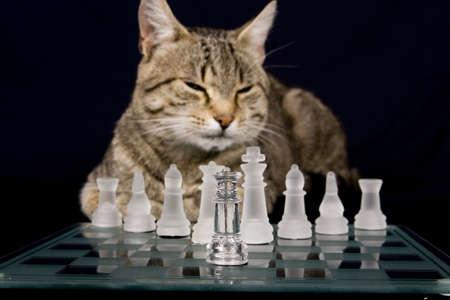 chess a strategy photo