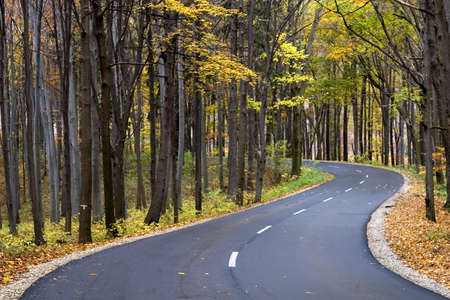 The road through the autumnal park photo