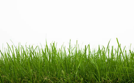 grass Stock Photo - 5011986