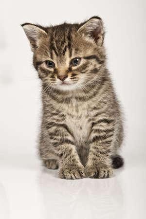 Little cat Stock Photo - 4969439