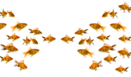 Goldfish concept photo
