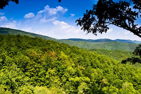 green mountain forest photo