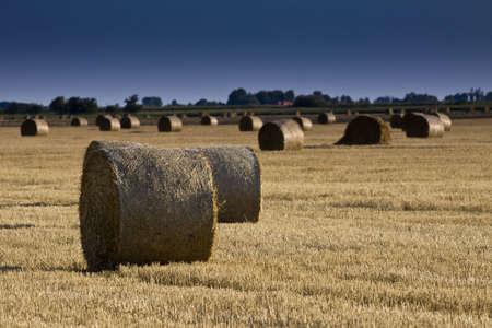 harvests:  Golden Hay Bales