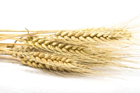 Grain ears Stock Photo - 5899237