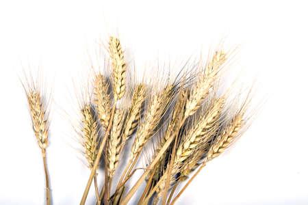 Grain ears Stock Photo - 5899220