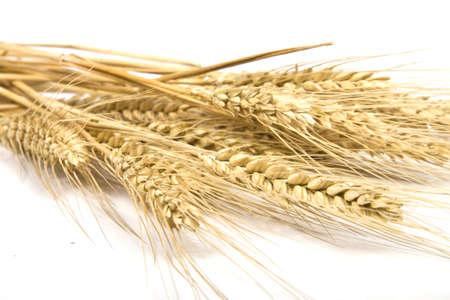 Grain ears photo