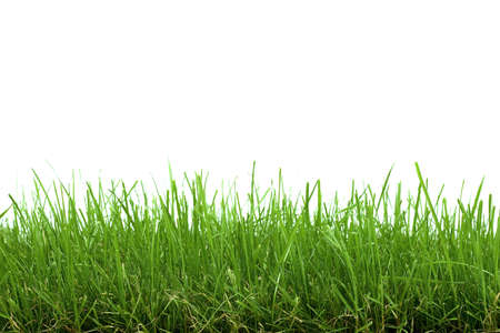 Green Grass Isolated on White photo