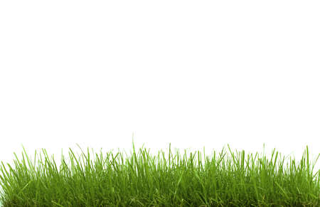 Green Grass Isolated on White Stock Photo - 6057629