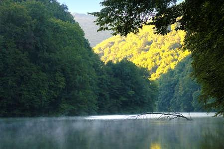lake morning forest photo