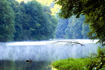 lake morning forest Stock Photo