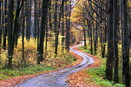 walking paths: The road through the autumnal park Stock Photo