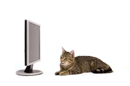 monitor and cat Stock Photo - 6237405