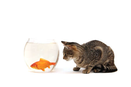 Home cat and a gold fish Stock Photo - 5867145