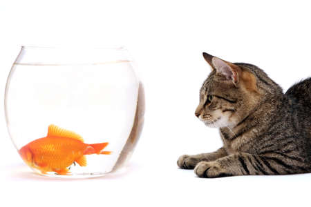 Home cat and a gold fish Stock Photo - 5867144