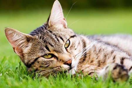 cat Stock Photo - 5867216