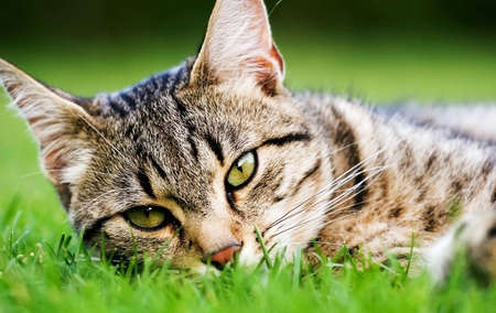 cat Stock Photo - 5867210