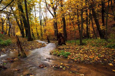 green vegetation:  Autumn scene at the forest